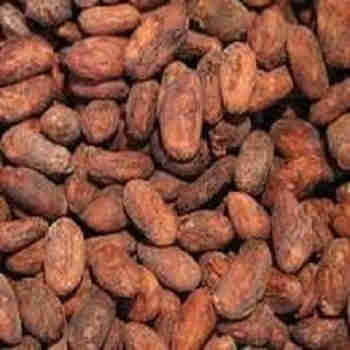 Natural dry cocoa seeds