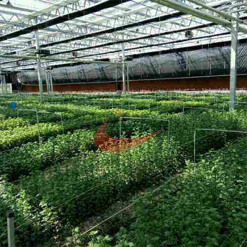 Commercial Agricultural Glass Greenhouse for Flower and Vegetables