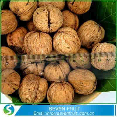 Wholesale Whole Walnut In Shell