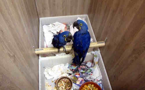 Parrot Pet Birds