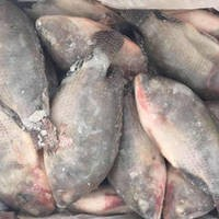 Frozen Tilapia Fish, Frozen Bonito Fish, Frozen Sardine Fish, Frozen Tilepia Fish