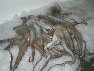 Octopus Seafood Fish