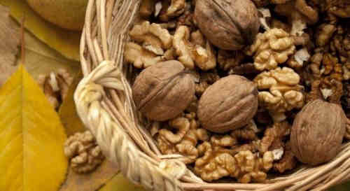 wholesale Cheap price wide dried Walnuts in shell/walnuts kernels for sale