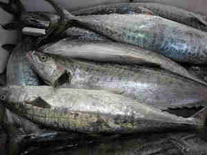We have Fresh Frozen Salmon/Salmon Fish Fillets available and ready for sale and export in wholesale