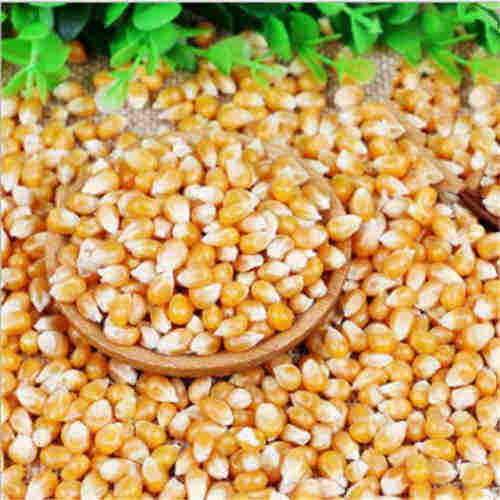 Yellow Corn, Cashew nuts ,Pea nuts,Black pepper,Icumsa Sugar 45 for Sale